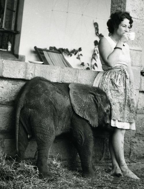 elephant-love